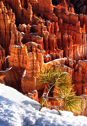 Southwest winter photo tour of Utah and Arizona's red rock country