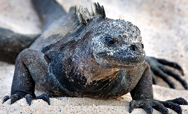 Photo tours in the Galapagos Islands, Ecuador