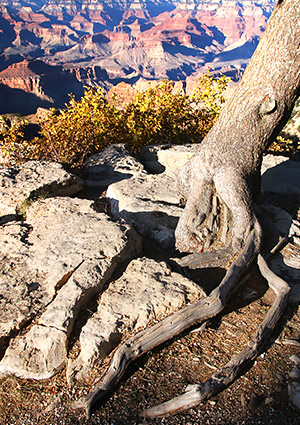Photo tour images from Grand Canyon National Park in Arizona