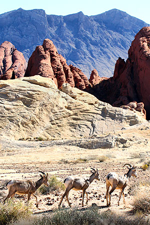 Photo tour to the Valley of Fire State Park, Nevada