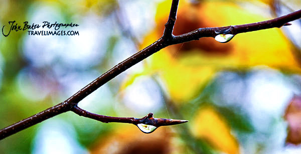 Water droplets on a branch, Vermont, New England