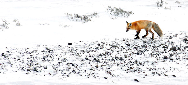 Winter photo tours of Yellowstone and Grand Teton national parks
